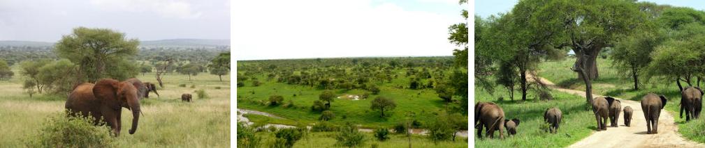 ZanTours Untouched Tanzania Day 8