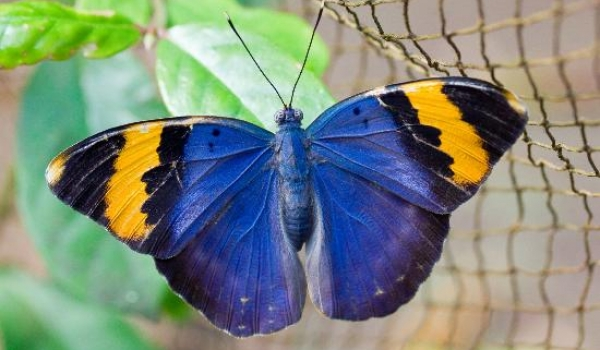 BUTTERFLY Center is a project supporting local communities