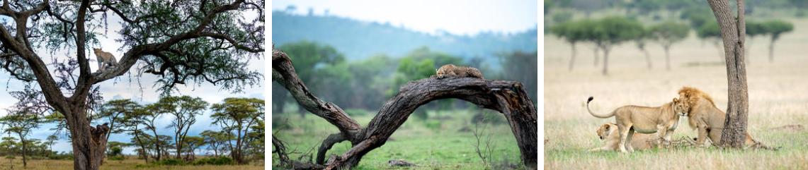 Singita Experience Serengeti