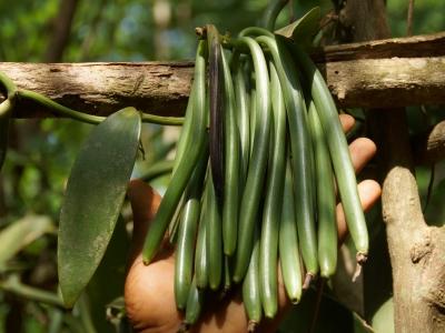 Spice Farm Zanzibar